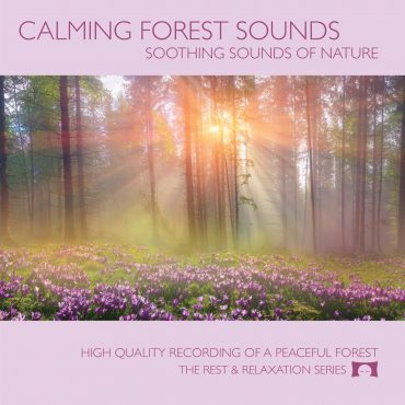 Calming Forest Sounds - Restful Sounds